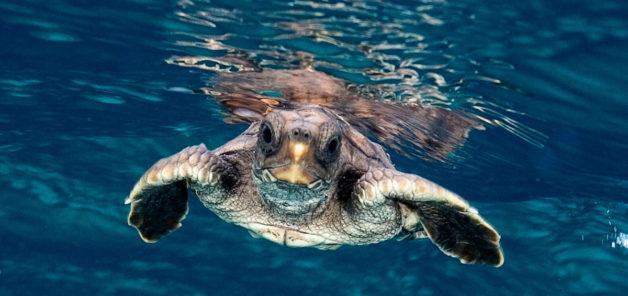 Tortuga – Die unglaubliche Reise der Meeresschildkröte ...